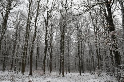 hiver forêt.jpg