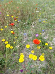 chanly,wellin,natagora,prairie,launaie,pollinisateur,biodibap,blog,sudinfo,sudpresse,la meuse,luxembourg,commune,province,philippe,alexandre