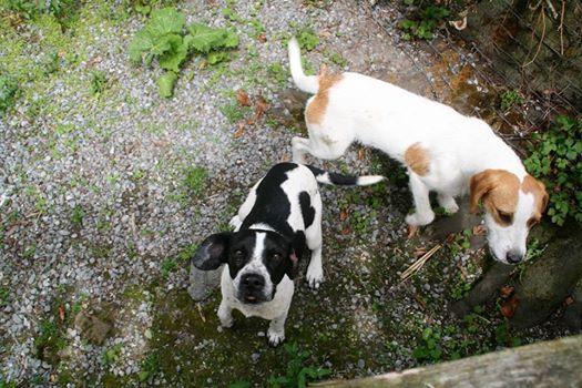 chiens wellin.jpg