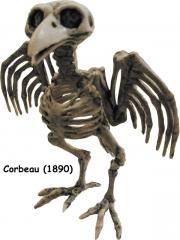 corbeau squelette.jpg
