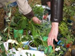 bourse-aux-plantes.jpg